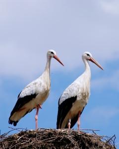 stork-440435